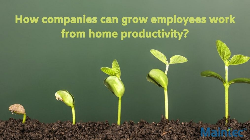 How companies can grow employees work from home productivity?